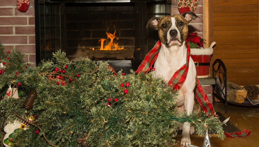 dog-christmas-tree-1024x581-1606577936.jpg