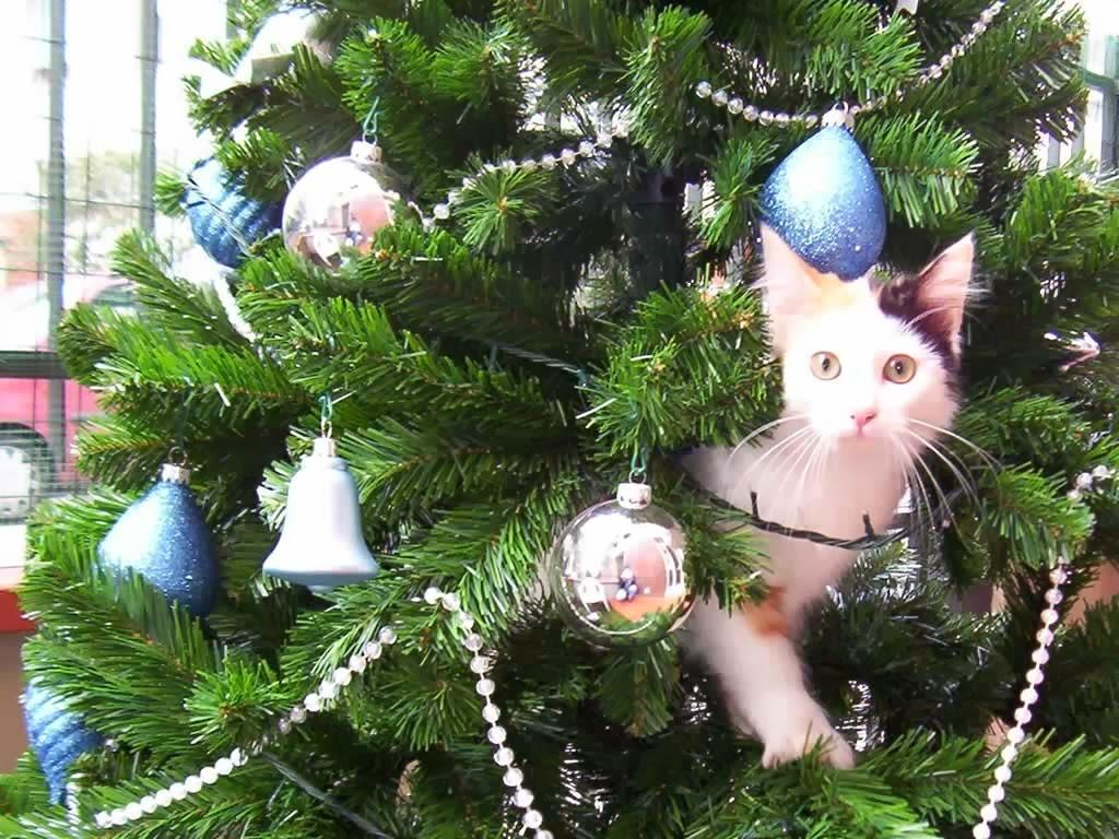 gatto-sullalbero-di-natale-1024-1606577897.jpg